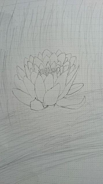 スイレンの花「雨」の画像(プリ画像)