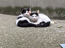 猫の画像(プリ画像)
