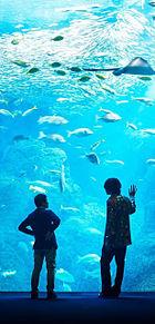 米津玄師♡海の幽霊 プリ画像