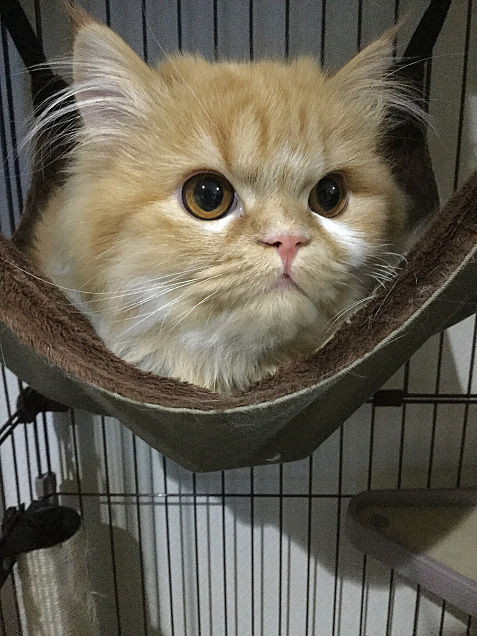うちの猫レンちゃん♡の画像(プリ画像)