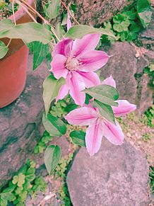 お花💐の画像(フォトジェニックに関連した画像)