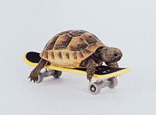 Tortoiseの画像(きもかわいいに関連した画像)