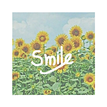 smile☀︎向日葵の画像(シンプル 待ち受けに関連した画像)