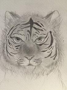 虎さんがおーの画像(プリ画像)