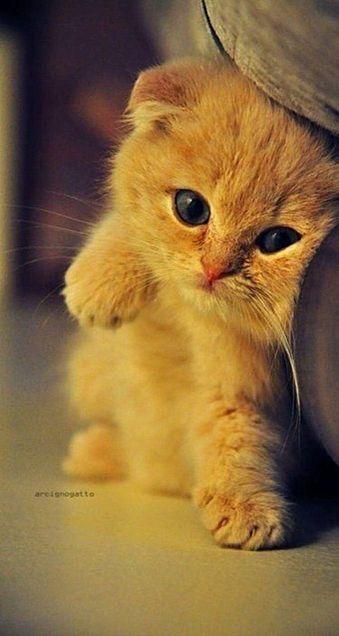 可愛いネコの画像(プリ画像)