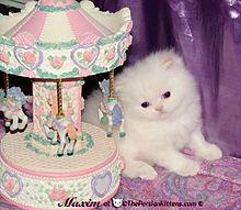 MISIAの画像(猫 おしゃれに関連した画像)