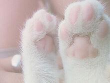猫の肉球の画像(CPに関連した画像)