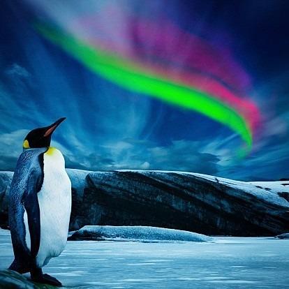 キングペンギンとオーロラの画像(プリ画像)