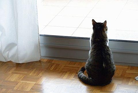 猫の後ろ姿の画像(プリ画像)
