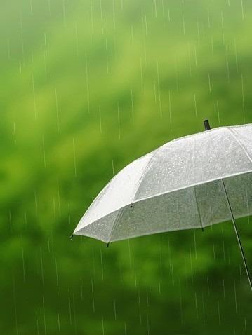 小降りの雨と傘の画像 プリ画像