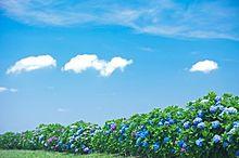 紫陽花と空の画像(プリ画像)