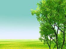 緑の画像(緑/自然/シンプルに関連した画像)