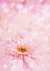 加工画の画像(フラワー/flower/花/ピンクに関連した画像)