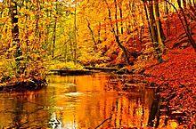 秋の森の画像(プリ画像)