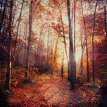 秋の森 2の画像(プリ画像)