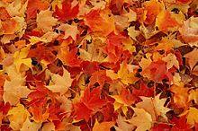 落ち葉の画像(プリ画像)