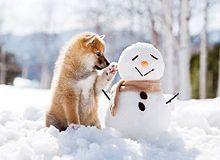犬 冬 素材 待ち受けの画像(犬 冬 素材 待ち受けに関連した画像)