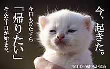 面白い 面白画像 帰宅部 アニメ 猫 癒し プリ画像
