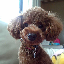 my pet ⍤⃝♡の画像(PETに関連した画像)