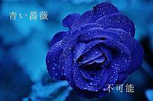花の詩 (日本語)の画像(プリ画像)