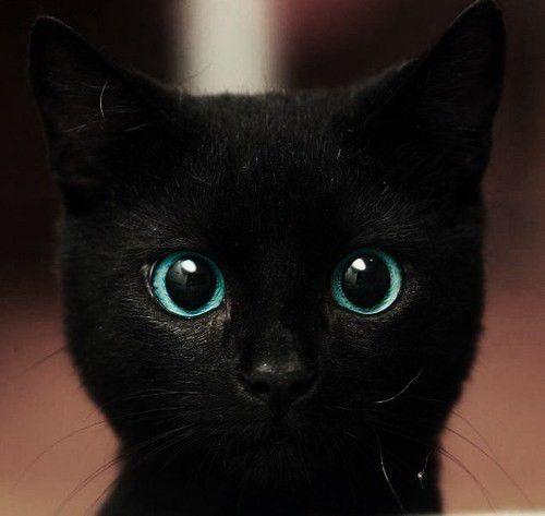 黒猫の画像 p1_5