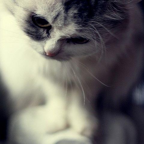 ネコちゃん・の画像 プリ画像