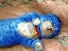 猫 ドラえもん おもしろ画像の画像(プリ画像)