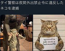 猫面白い写真