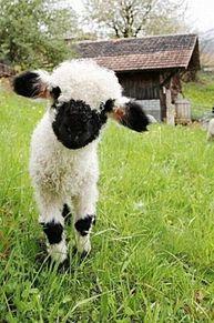 かわいい 可愛い 動物 草原 待ち受けの画像(かわいい 可愛い 動物 草原 待ち受けに関連した画像)