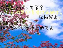 ハナミズキ 花言葉 プリ画像