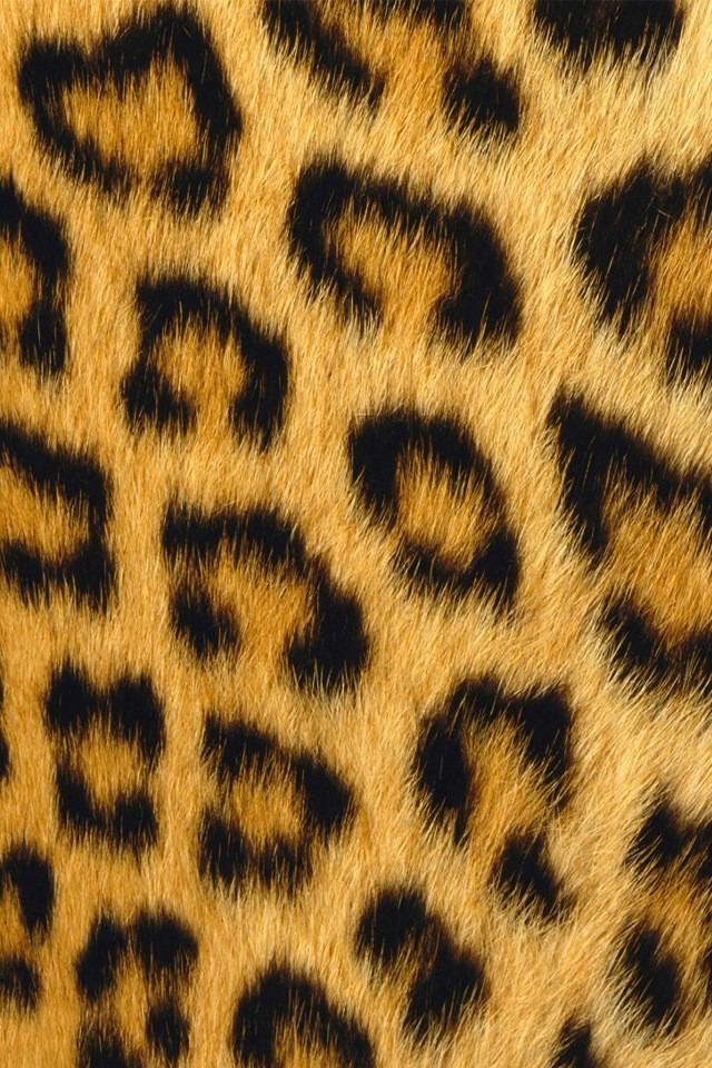 ヒョウの画像 p1_16