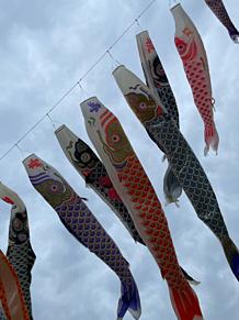 鯉のぼり 千葉県 の画像(千葉に関連した画像)