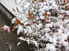 ❄雪⛄️ プリ画像