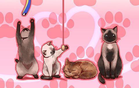 猫ちゃんズの画像(プリ画像)