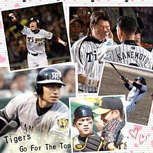 阪神タイガースの画像(城島健司に関連した画像)