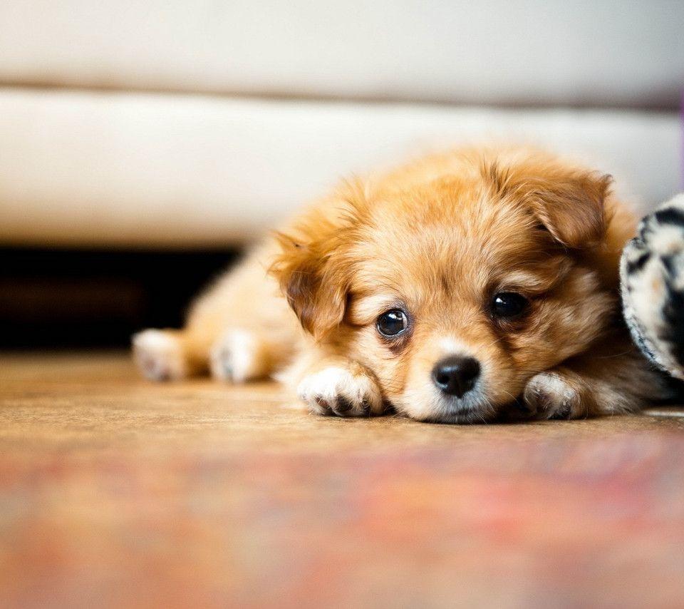 いぬ イヌ 犬 動物 かわいい 壁紙 待ち受け 高画質 16717679 完全