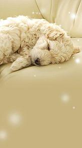 いぬ イヌ 犬 動物 かわいい 壁紙 待ち受け 高画質