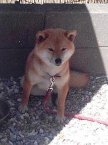 ゆかりの犬!! プリ画像