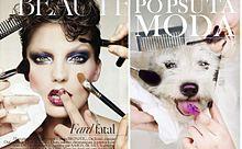捨てられた犬たちが表紙に!ファッション誌のわんこモデルが可愛すぎるの画像(ファッション誌に関連した画像)