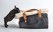 モフモフ寝心地にワンコもご満悦!オーガニックコットンのキャリーバッグがかっこいいの画像(オーガニックに関連した画像)