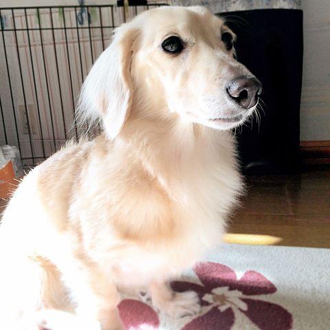愛犬がおすまししてるの画像(プリ画像)