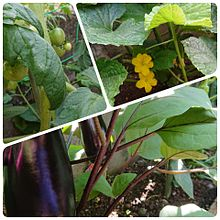 家庭菜園の画像(家庭に関連した画像)