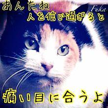 三毛猫ホームズの推理  ホームズの画像(嵐 notヲタバレに関連した画像)