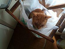 猫のいっち、in ゴミ袋の画像(ゴミ袋に関連した画像)