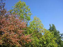秋空 プリ画像