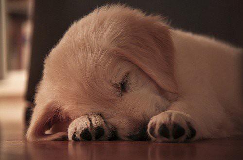 動物達の寝顔の画像ください-i-11-0