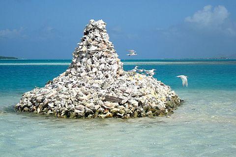 鳥の島の画像(プリ画像)
