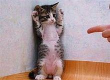 ネコたんの画像(おもしろ 待ち受けに関連した画像)