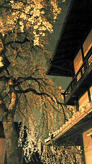 夜桜。の画像(プリ画像)