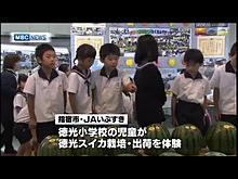 鹿児島市で競り 小学生が育てた徳光スイカ プリ画像